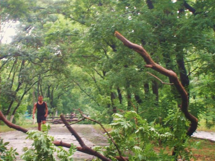 трасса здоровья, одесса, плохая погода. буря одесса. ливень, упало дерево