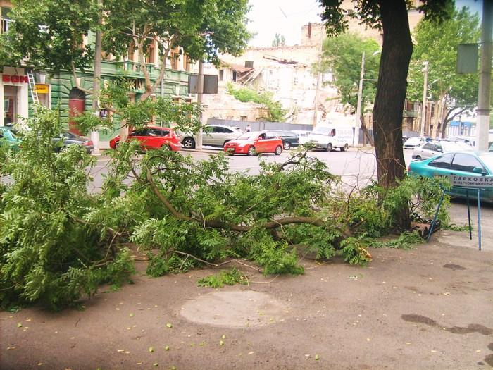 одесса, плохая погода. буря одесса. ливень, упало дерево