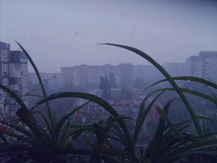 растения комнатные, ливень кишинев, молдова ливни, растения мокрые, после дождя