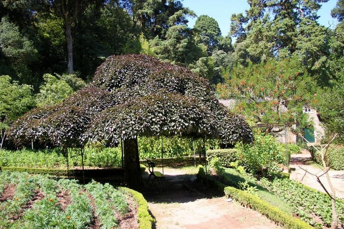 Дворец удовольствий в окружении леса Буссакo 86756