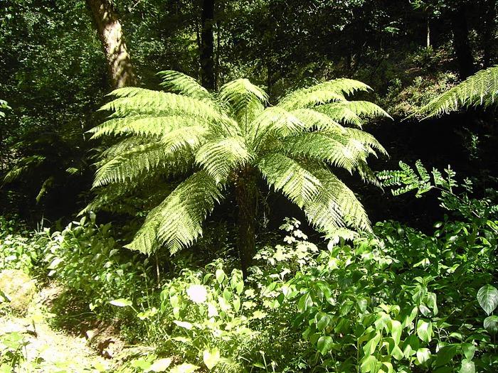 Дворец удовольствий в окружении леса Буссакo 39985