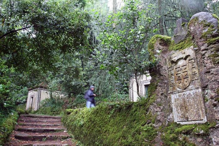 Дворец удовольствий в окружении леса Буссакo 83498