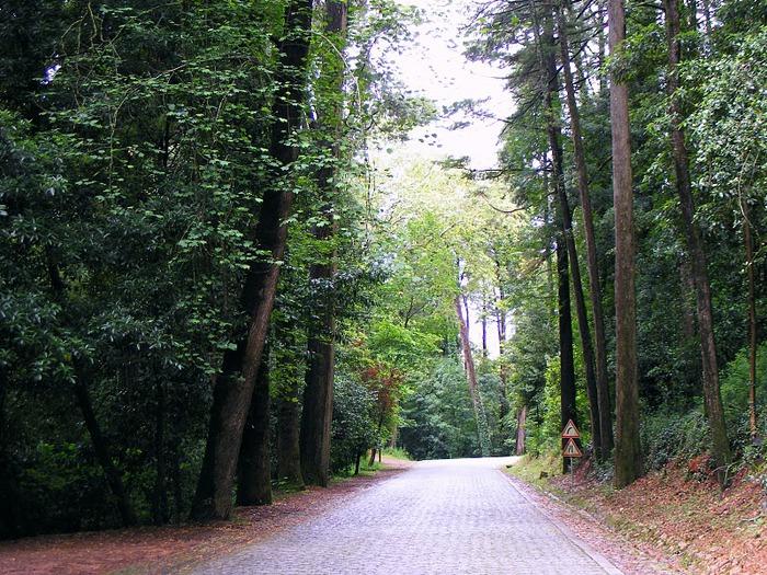 Дворец удовольствий в окружении леса Буссакo 94826