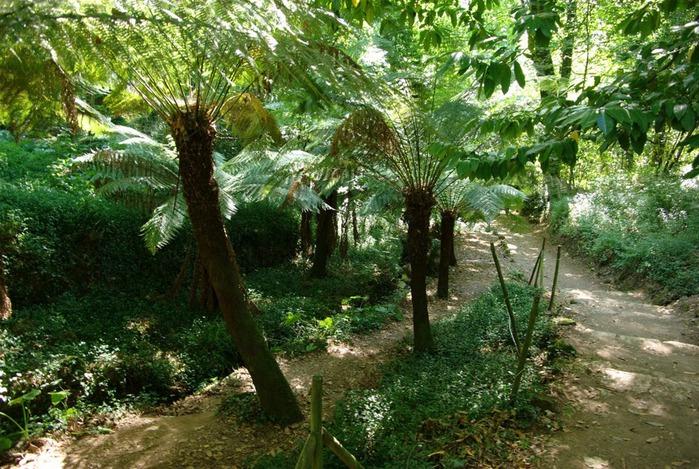 Дворец удовольствий в окружении леса Буссакo 98742