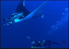 6 красивейших мест на нашей планете – подводная съёмка Галапагосских островов, Сипадан, Антарктика, Сокорро, Раджа Ампат и Филиппины