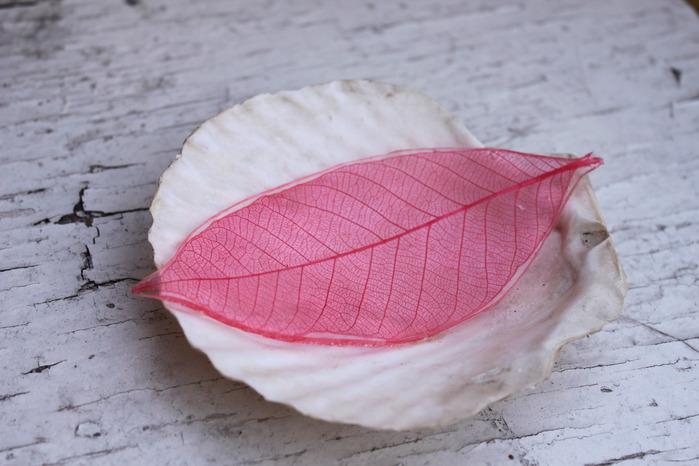 Осенние листья 61886083_IMG_6369