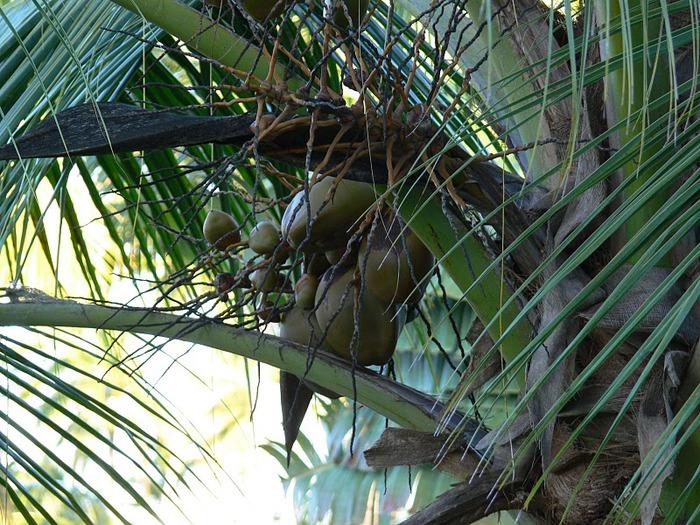 Доминикана - тропический рай. 64189