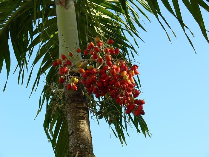 Доминикана - тропический рай. 25219