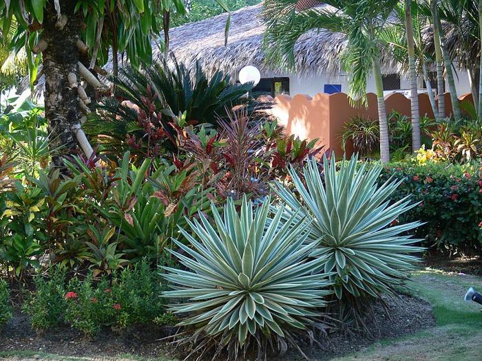 Доминикана - тропический рай. 18460
