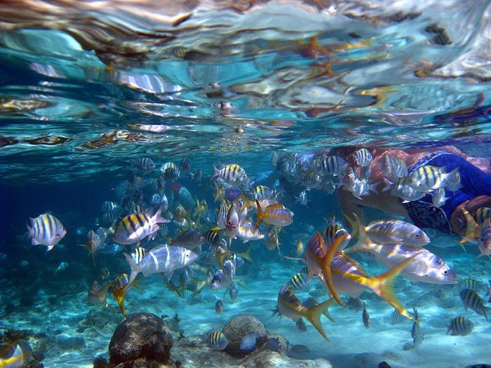 Доминикана - тропический рай. 82738