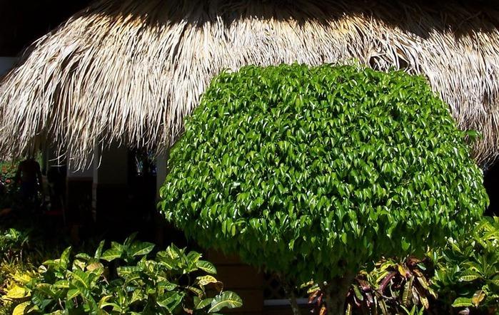 Доминикана - тропический рай. 52603