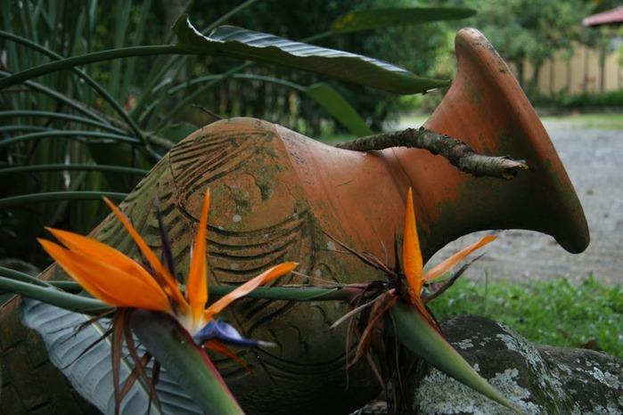 Доминикана - тропический рай. 62715