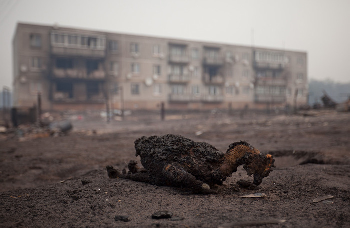 The carcass of a charred bird lies in the village of Mokhovoe destroyed by an earlier forest fire, seen on Friday, July 30, 2010. (AP Photo/Dmitry Chistoprudov)