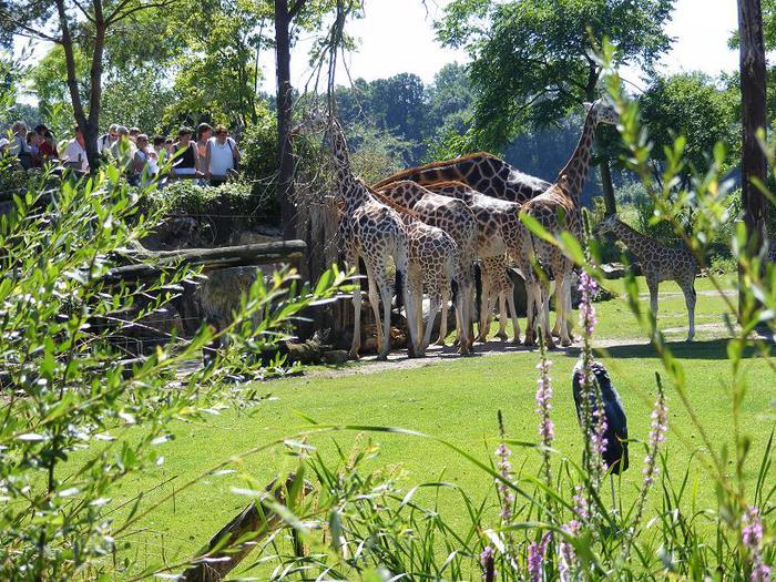 Зоологический сад в Лейпциге (Zoologischer Garten, Leipzig ) 57868