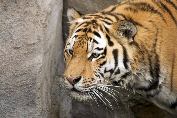 Зоологический сад в Лейпциге (Zoologischer Garten, Leipzig ) 82292