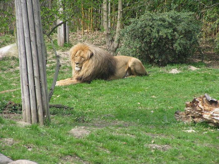 Зоологический сад в Лейпциге (Zoologischer Garten, Leipzig ) 74802