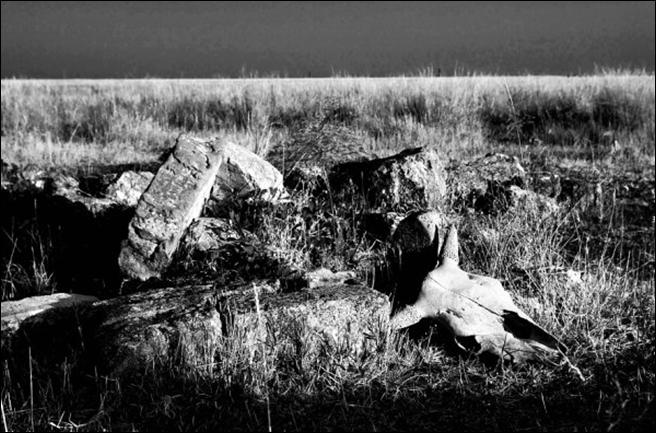 Тендровская коса (Тендра) фотографа Геннадия Голубева