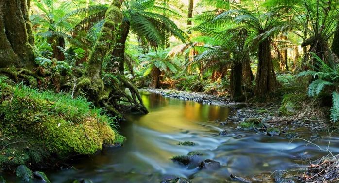 800px-Необычная_природа_Австралии (698x378, 169 Kb)
