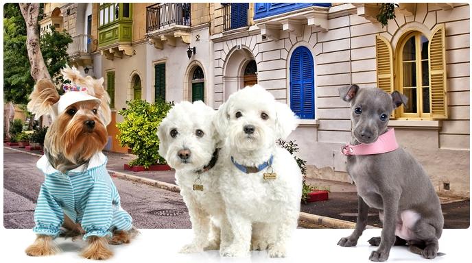 интернет-магазин одежды для собак