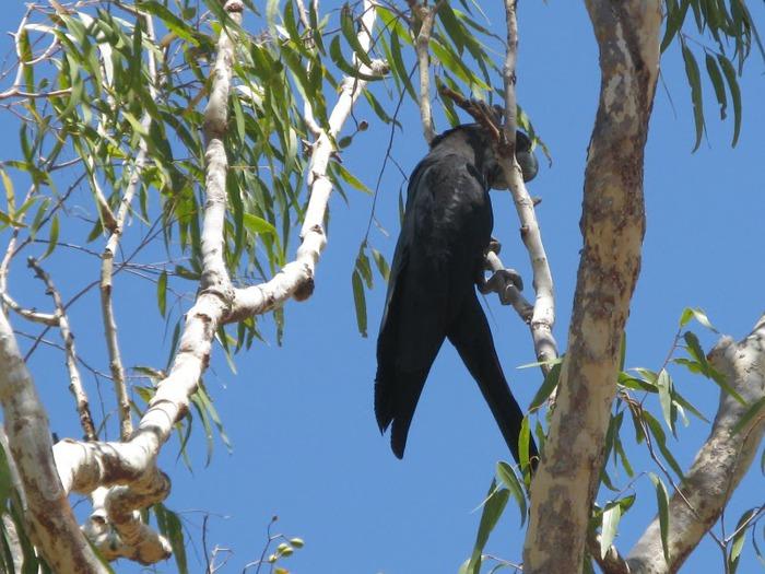 Национальный парк Какаду (Австралия) 27421