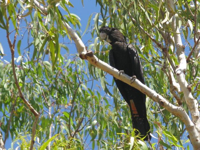 Национальный парк Какаду (Австралия) 12632