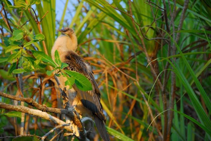 Национальный парк Какаду (Австралия) 99296
