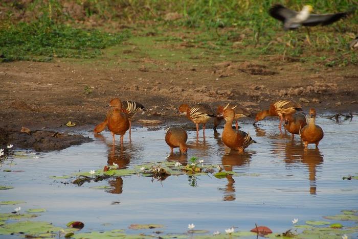 Национальный парк Какаду (Австралия) 43050