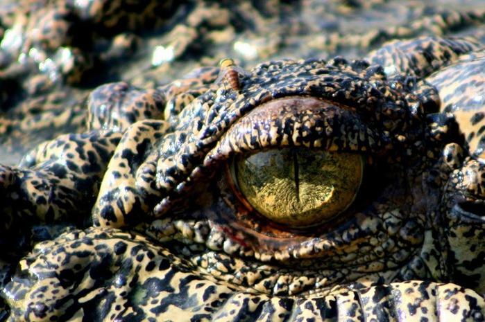 Национальный парк Какаду (Австралия) 27864