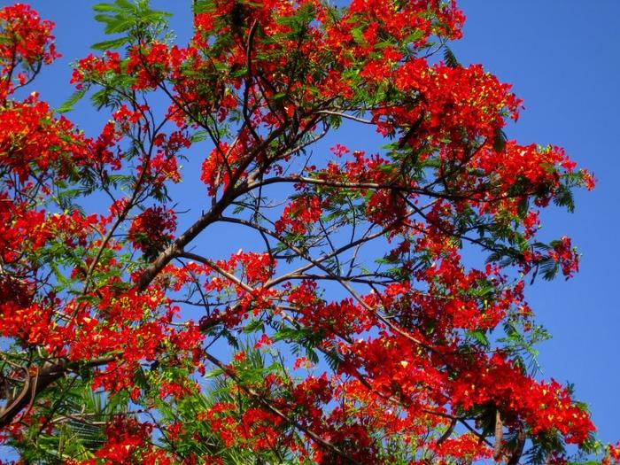 Национальный парк Какаду (Австралия) 37120