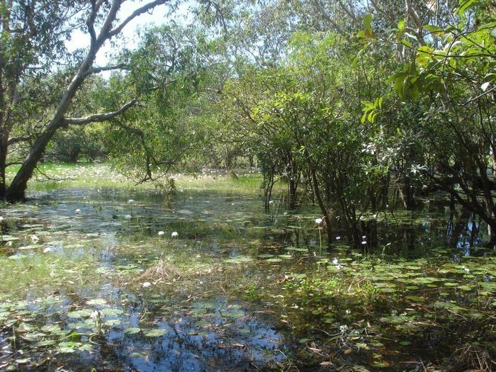 Национальный парк Какаду (Австралия) 25962