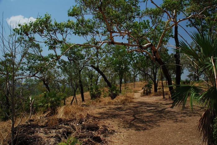 Национальный парк Какаду (Австралия) 64038