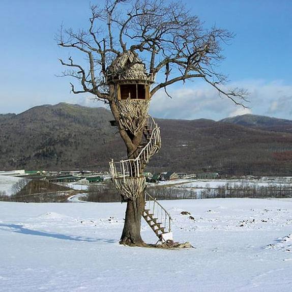Дома на деревьях