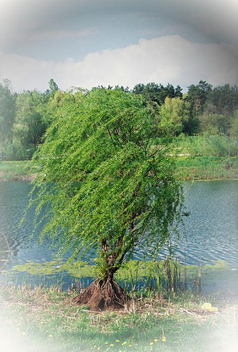 http://img1.liveinternet.ru/images/attach/c/1//62/956/62956731_2717168.jpg