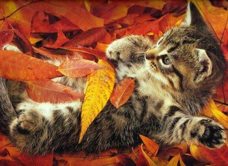 Картинки осень котенок