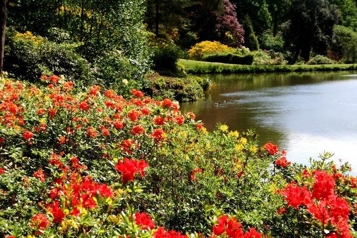 Сад Леонардсли - Leonardslee gardens 98077