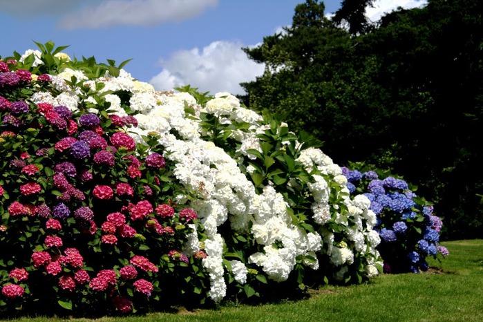 Сад Леонардсли - Leonardslee gardens 31920