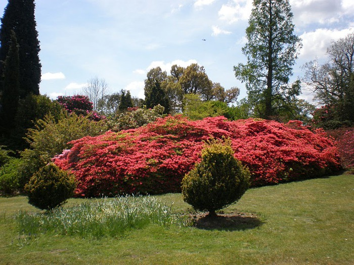 Сад Леонардсли - Leonardslee gardens 57843