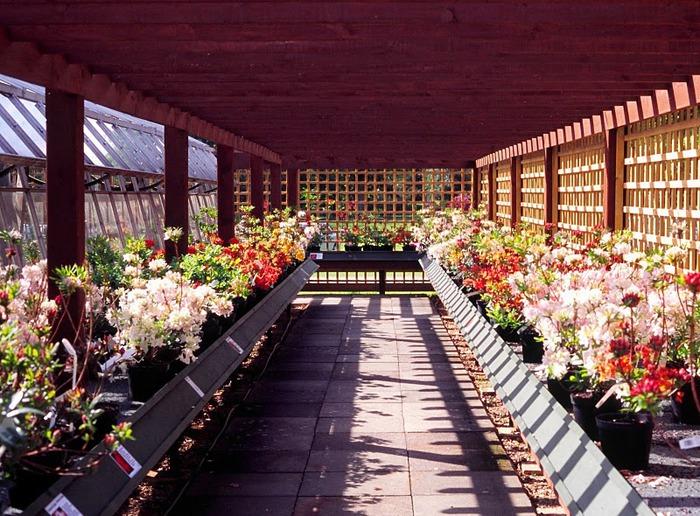 Сад Леонардсли - Leonardslee gardens 17991