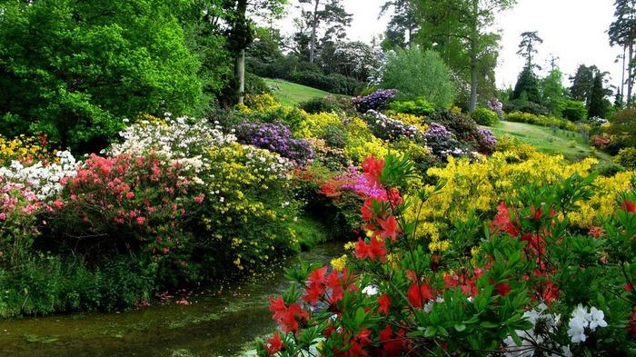 Сад Леонардсли - Leonardslee gardens 56493