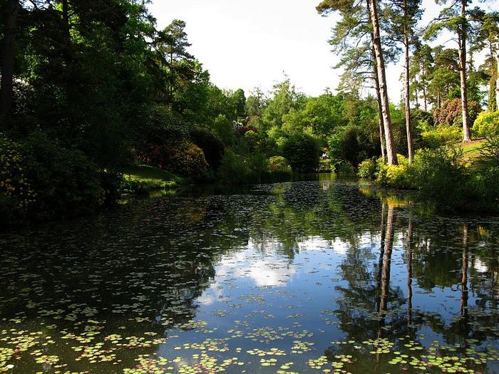 Сад Леонардсли - Leonardslee gardens 59474