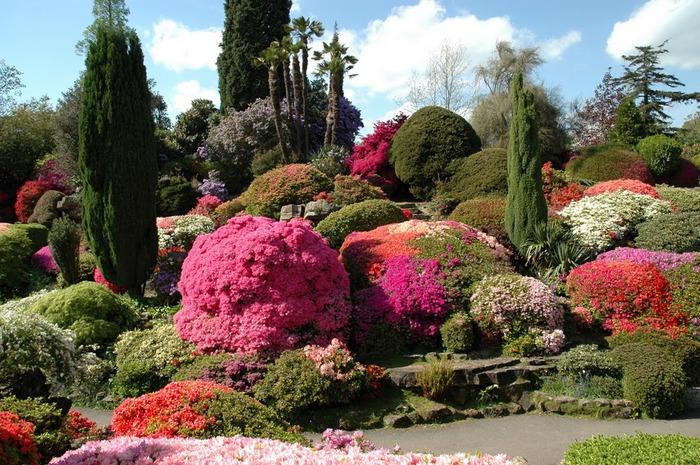 Сад Леонардсли - Leonardslee gardens 40693