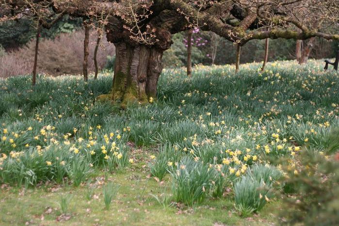 Сад Леонардсли - Leonardslee gardens 29629
