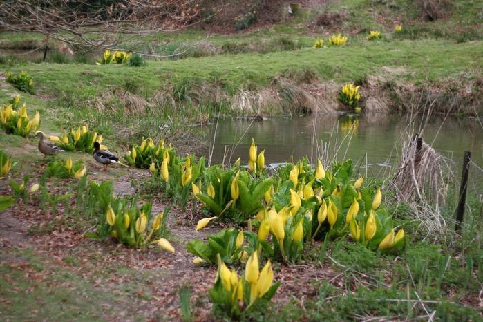 Сад Леонардсли - Leonardslee gardens 88774