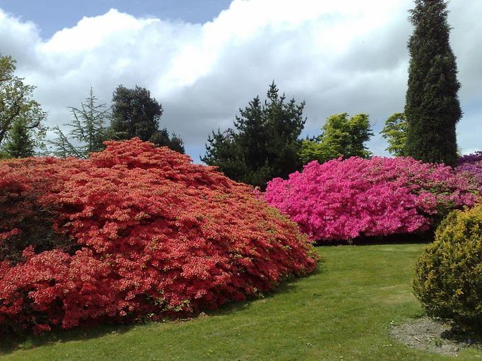 Сад Леонардсли - Leonardslee gardens 52422