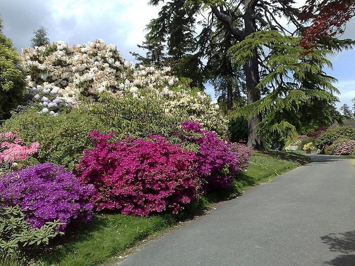 Сад Леонардсли - Leonardslee gardens 84082