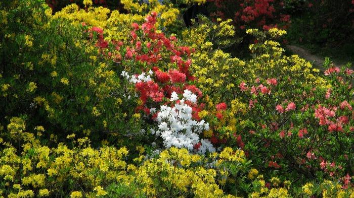 Сад Леонардсли - Leonardslee gardens 11929