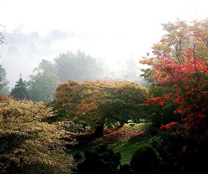 Сад Леонардсли - Leonardslee gardens 17380