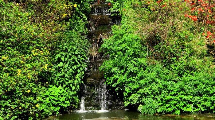 Сад Леонардсли - Leonardslee gardens 14959