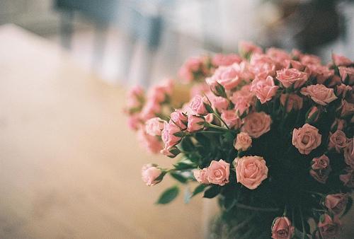 Маленькие цветы розы