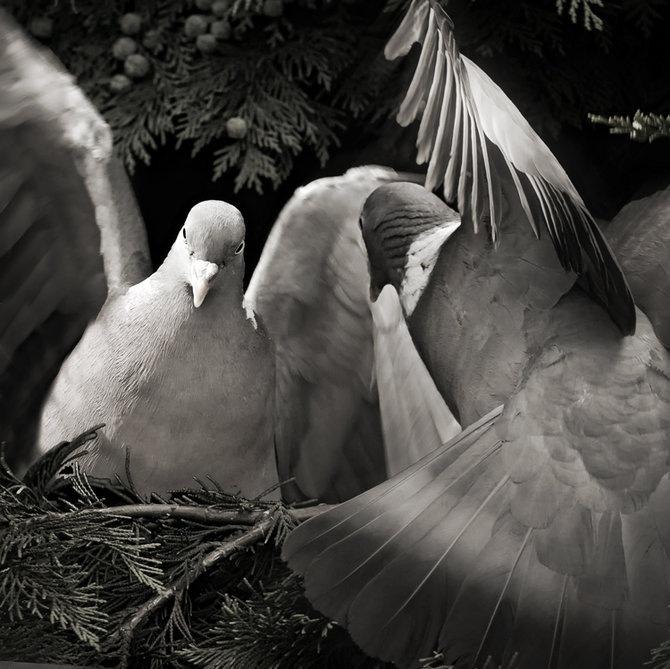 Фотограф Piet Flour 33